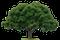 ARBOR-PRO Wycinka drzew w miejscach trudno dostępnych, logo