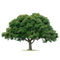ARBOR-PRO - Wycinka drzew, pielęgnacja