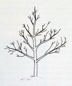 Drzewo z wyraźnym przewodnikiem