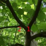 Połączenia gałęzi