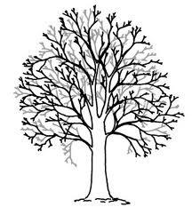 przerzedzanie korony drzewa