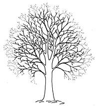redukcja korony drzewa