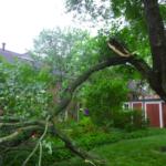 zlamany konar drzewa