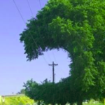 kolizja drzewa z linią wysokiego napięcia