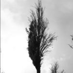 Obumarła część drzewa
